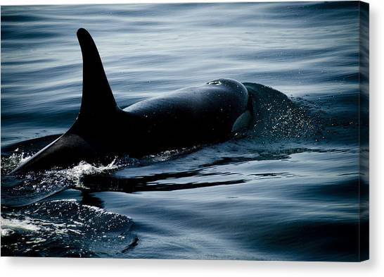 Orca Whale Canvas Print