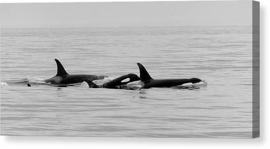 Orcas Bw Canvas Print