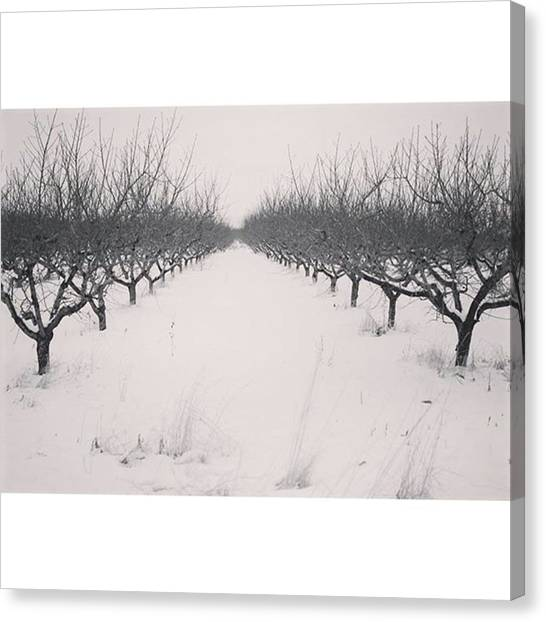 Orchard Canvas Print - Orchard On A Snowy Day  #og #ogden by Melissa Helmbrecht