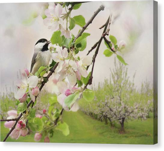 Wild Orchards Canvas Print - Orchard Visitor 2 by Lori Deiter