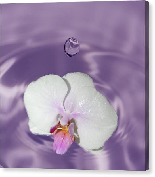 White Orchid Water Drop Canvas Print