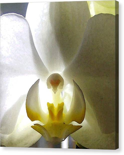 Orchid - The Wallflower Canvas Print by Dina Sierra
