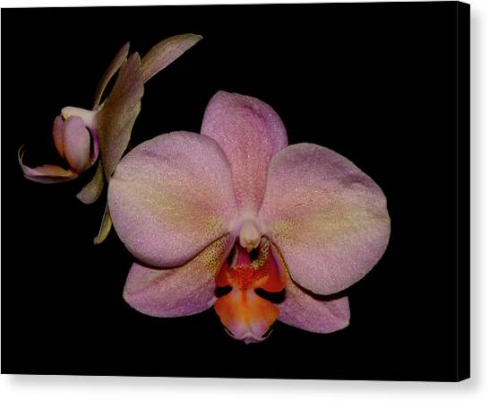 Orchid 2016 3 Canvas Print