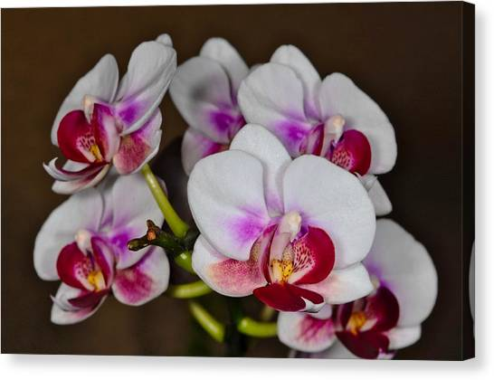 Canvas Print featuring the photograph Orchid 306 by Wesley Elsberry