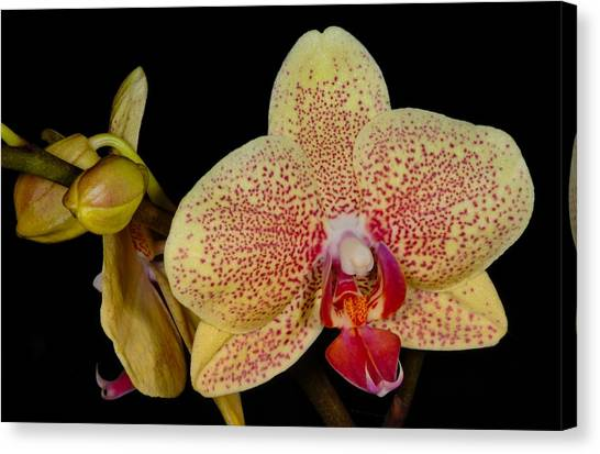 Canvas Print featuring the photograph Orchid 377 by Wesley Elsberry