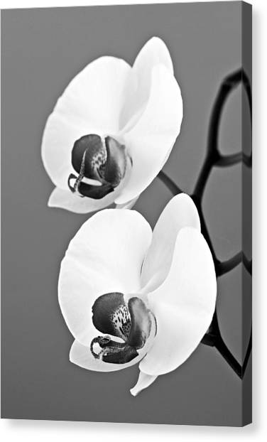 St. Lucia Canvas Print - orchid-4- St Lucia by Chester Williams