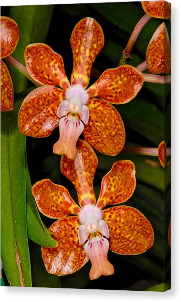 Canvas Print featuring the photograph Orchid 450 by Wesley Elsberry