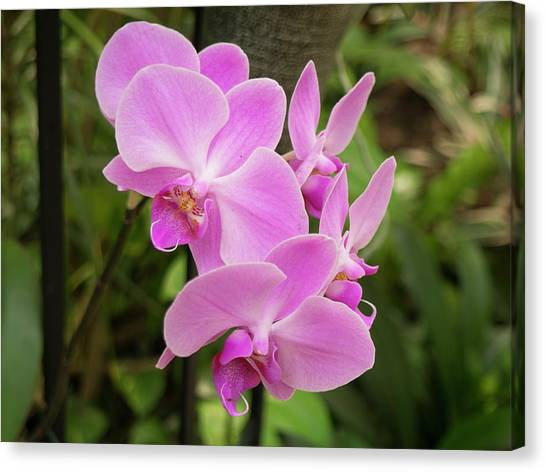 Orchid #6 Canvas Print