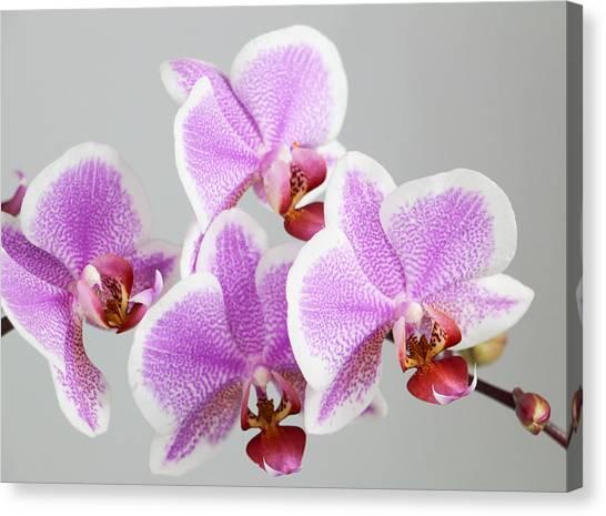 Orchid Array Canvas Print