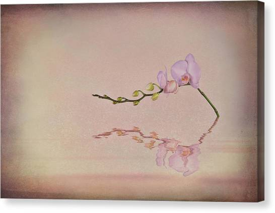White Orchid Canvas Print - Orchid Blooms And Buds by Tom Mc Nemar