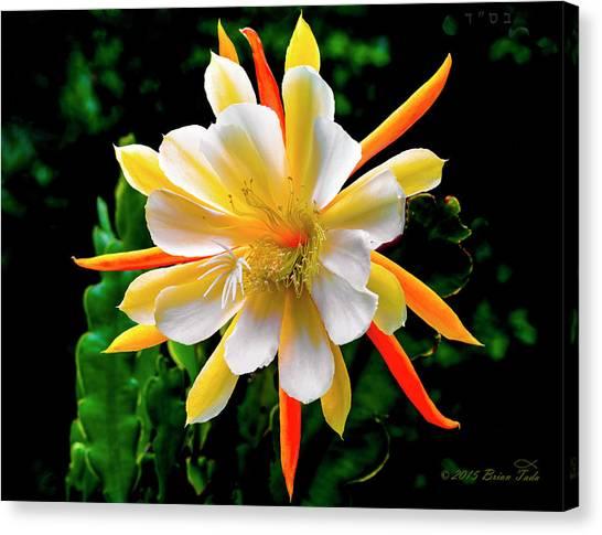 Orchid Cactus Epiphyllum Canvas Print