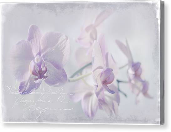 Canvas Print - Orchid Dreams by Amanda Lakey
