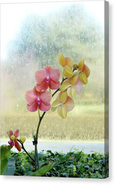 Orchid In Portrait Canvas Print