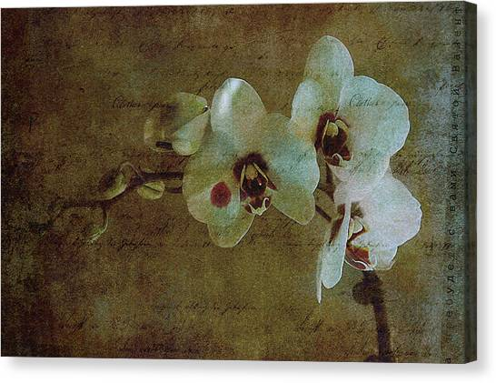 Orchid Canvas Print by Inesa Kayuta