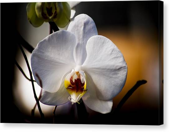 Orchid Canvas Print by John Ater