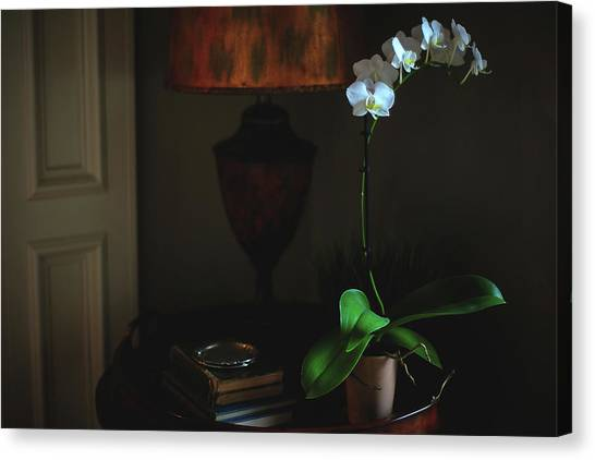 Orchid Morning Canvas Print by Paul Green