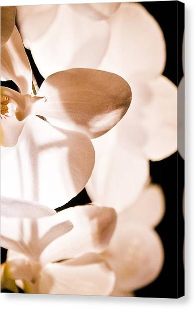 Orchid Canvas Print by Nora Batternay