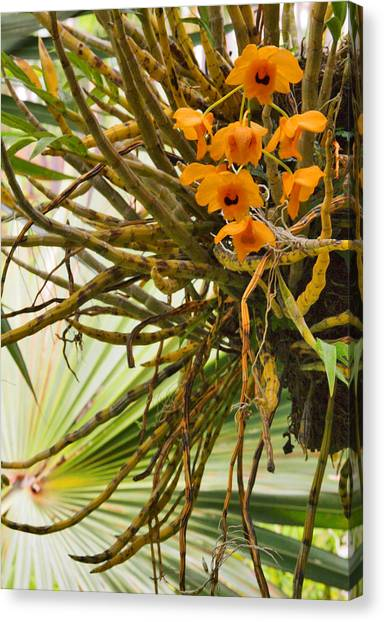 Orchid Canvas Print by Pamela Kelly Phillips
