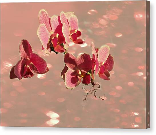 Orchid Petals In Pink Canvas Print by Irma BACKELANT GALLERIES