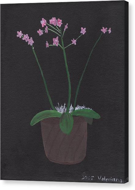 Orchid-phalaeropsis Hybrid Canvas Print