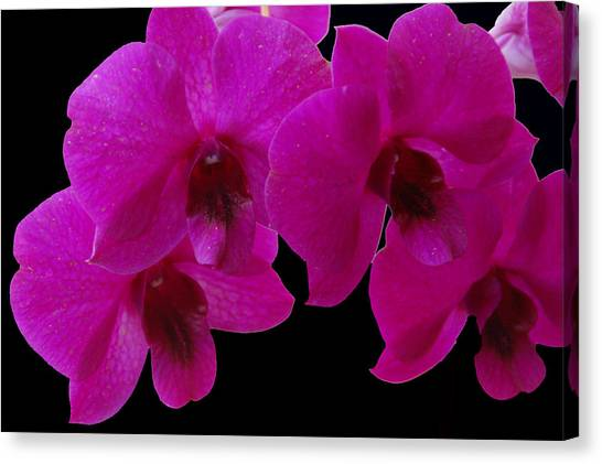 Orchid Song Canvas Print
