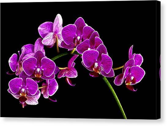 Orchid Splendor Canvas Print by Robert  McCord