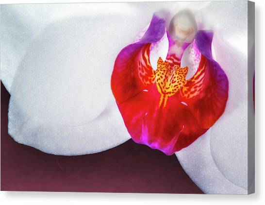 White Orchid Canvas Print - Orchid Up Close by Tom Mc Nemar