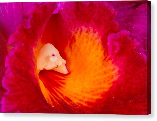 Canvas Print featuring the photograph Orchid Vortex 458 by Wesley Elsberry