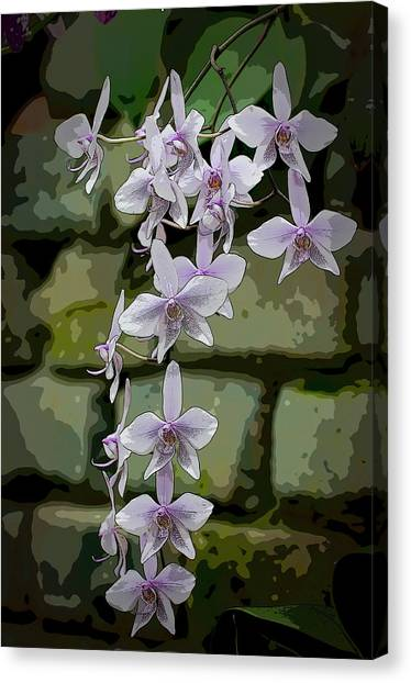 Orchid Waterfall Canvas Print
