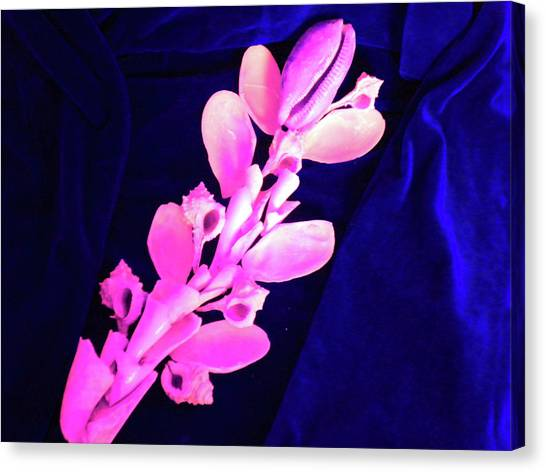 Orchidaceae Shell Canvas Print by Arlin Jules