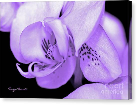 Orchid...orchid.... Canvas Print