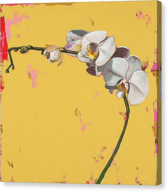 Orchids Canvas Print - Orchids #3 by David Palmer