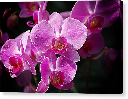 Orchids 4 Canvas Print