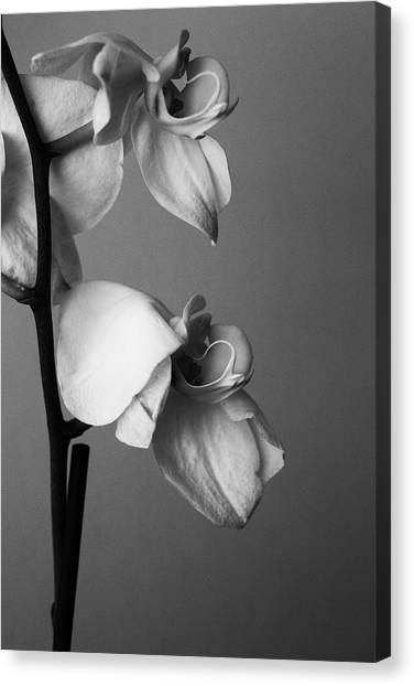 Orchids - April 2009 Canvas Print