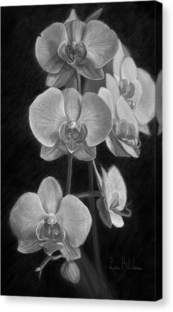 Orchids Canvas Print - Orchids - Black And White by Lucie Bilodeau