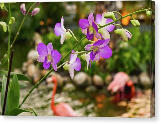 Orchids In Paradise Canvas Print