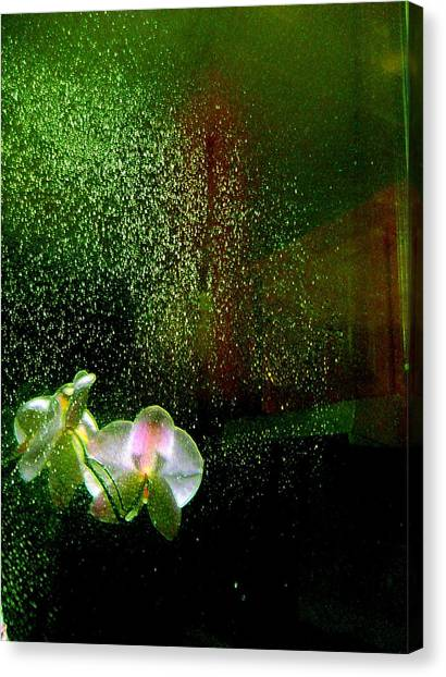 Orchids In The Rain Canvas Print
