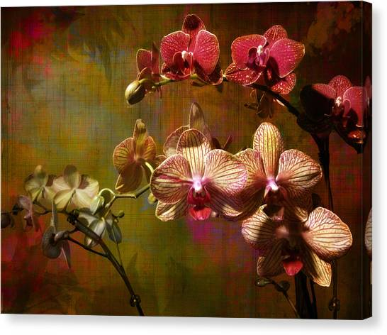 Orchids On Silk Canvas Print