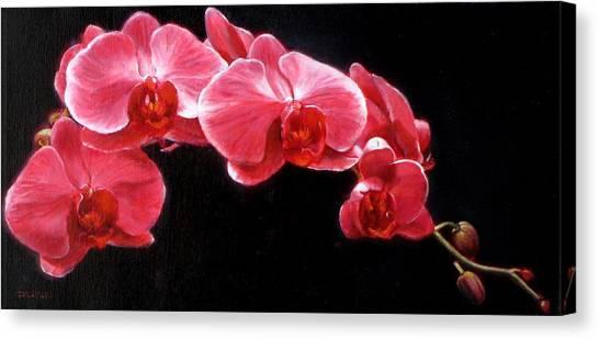 Orchids Canvas Print by Takayuki Harada