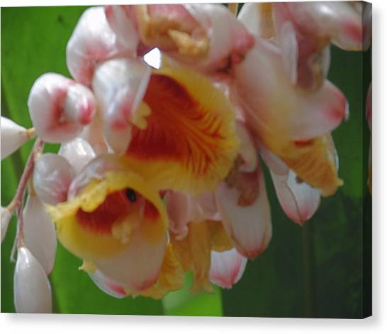 Orchids Canvas Print by Ursula Wright