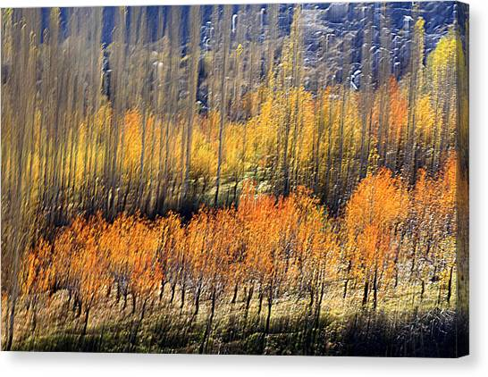 Ordered Canvas Print by Robert Shahbazi