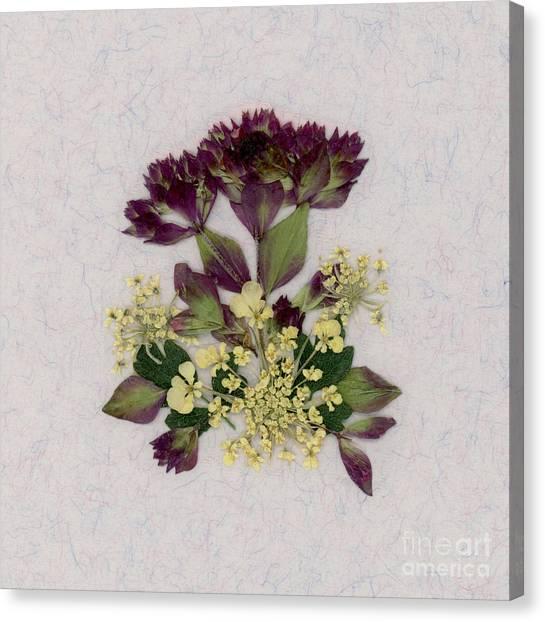 Oregano Florets And Leaves Pressed Flower Design Canvas Print