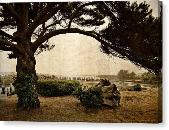 Oregon Coastline With Tree Canvas Print