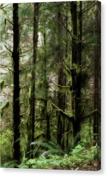 Oregon Old Growth Coastal Forest Canvas Print