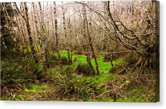 Oregon Rainforest Canvas Print