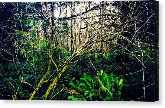 Oregon Rainforest II Canvas Print