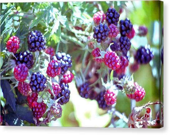 Wild Berries Canvas Print - Oregonian Wild Berries by Steve Ohlsen