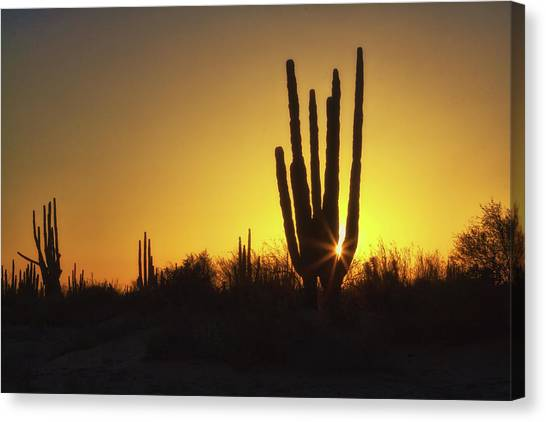 Organ Pipe Cactus Canvas Print