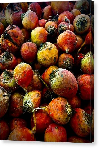 Organic Beets Canvas Print