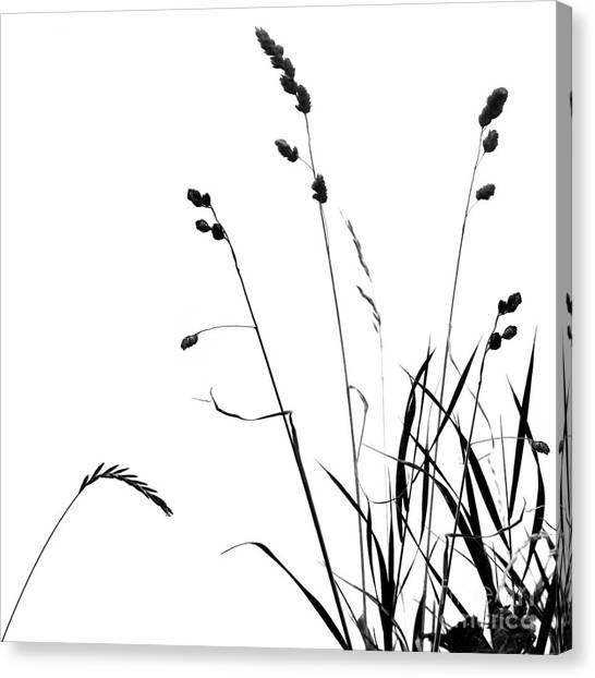 Organic Enhancements 10 Canvas Print